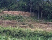 Arima Approved Land