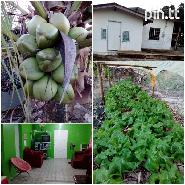 Mamoral 2 Bedroom House with 1.25 Acres-2