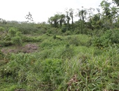 Lease Hold Land