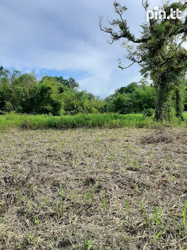 5 Acres Prime Residential Freehold Land in Sangre Grande.-1